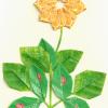 kvet_0