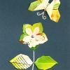 c-motyl-a-kvet